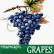 Grapes Watercolor Illustration - GraphicRiver Item for Sale