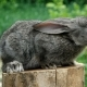 Lovely Rabbit. Beautiful Animal Of Wild Nature - VideoHive Item for Sale