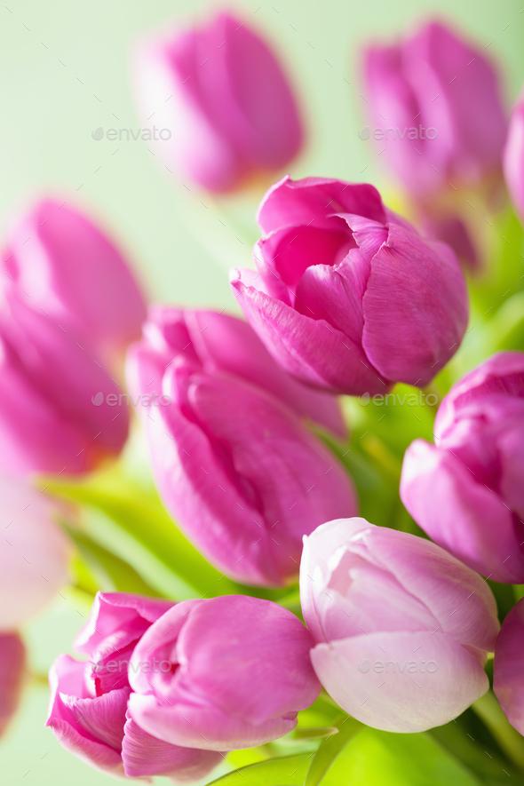 beautiful purple tulip flowers background - Stock Photo - Images
