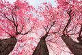 Tree blossom - PhotoDune Item for Sale