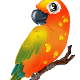Colorful Bird - GraphicRiver Item for Sale