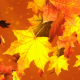 Golden Autumn - VideoHive Item for Sale