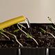 Watering of Seedling - VideoHive Item for Sale