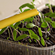 Watering of Seedling 2 - VideoHive Item for Sale