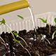 Watering of Seedling 4 - VideoHive Item for Sale
