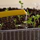 Watering of Seedling 5 - VideoHive Item for Sale