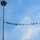 Birds On Wire - VideoHive Item for Sale