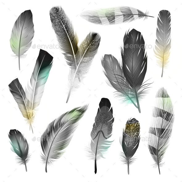 Black and White Feathers Set - Animals Characters