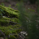 Green Moss and Leaves on the Forest Ground - VideoHive Item for Sale