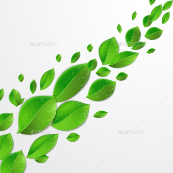 Green Leaves On a White Background - Flowers & Plants Nature