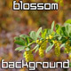 Spring Garden Blossoms - VideoHive Item for Sale