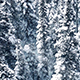 Aerial Frozen Trees In Snowfall - VideoHive Item for Sale