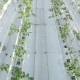Long Rows Of Green Plants In a Huge Glasshouse - VideoHive Item for Sale
