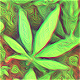 Marijuana Logo - VideoHive Item for Sale