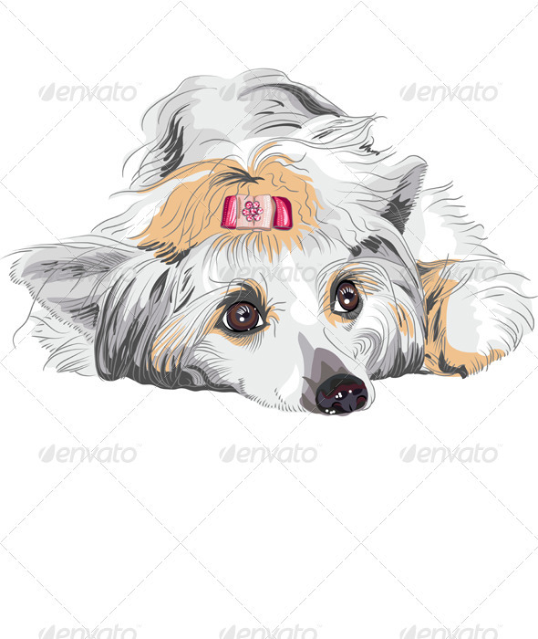 Vector Sketch Dog Chinese Crested breed - Animals Characters