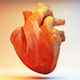 3D Heart Anatomy - 3DOcean Item for Sale