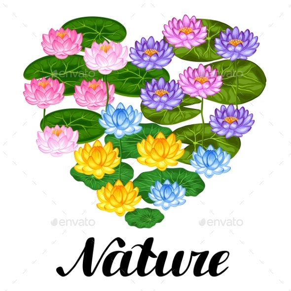 Natural Background With Lotus Flowers And Leaves - Flowers & Plants Nature