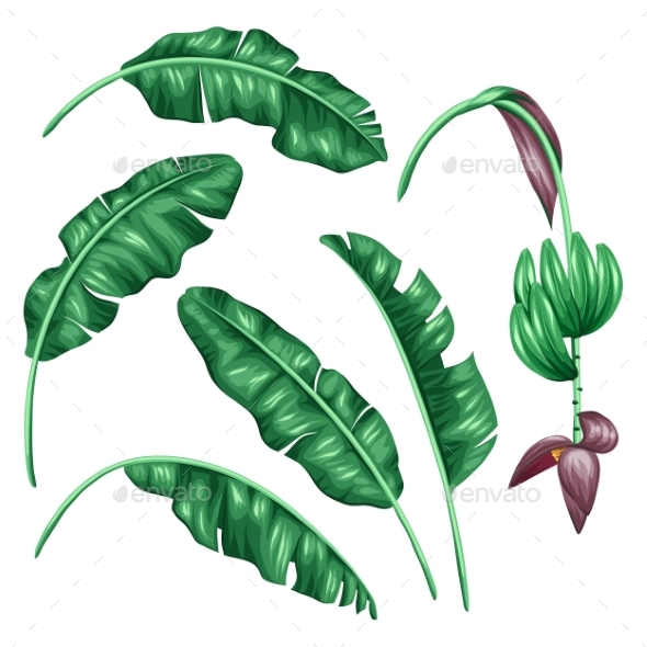 Set Of Stylized Banana Leaves. Decorative Image - Flowers & Plants Nature
