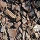 Small Bark - GraphicRiver Item for Sale