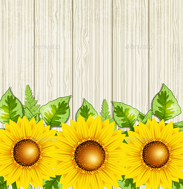 Summer Background with Sunflowers - Flowers & Plants Nature