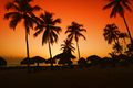 sunset on caribbean beach with silhouette of palms - PhotoDune Item for Sale