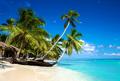 Tropical beach in caribbean sea, Saona island, Dominican Republic - PhotoDune Item for Sale