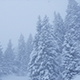 Snow Falls On The Trees - VideoHive Item for Sale
