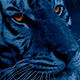 Tiger At Night With Glowing Eyes - VideoHive Item for Sale