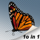 10 Flying Butterfly - VideoHive Item for Sale