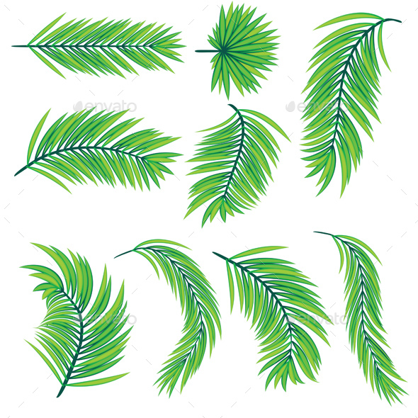 Green Palm Leaves - Flowers & Plants Nature