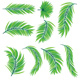 Green Palm Leaves - GraphicRiver Item for Sale