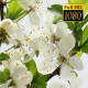 Beautiful Cherry Blossom 18 - VideoHive Item for Sale