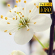 Beautiful Cherry Blossom 20 - VideoHive Item for Sale