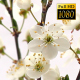 Beautiful Cherry Blossom 22 - VideoHive Item for Sale