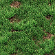 Grass seamless texture for CG Nulled