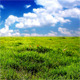 Green Field - VideoHive Item for Sale