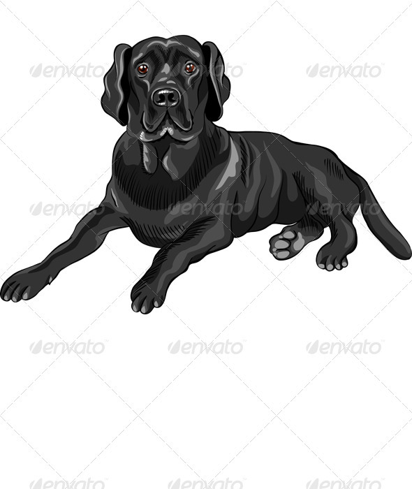 Vector Sketch Dog Breed Black Labrador Retrievers - Animals Characters