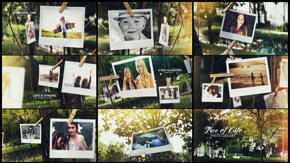 Videohive Tree of Life Photo Gallery 15795143