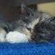 Sleepy Kitten - VideoHive Item for Sale