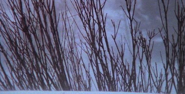 Winter Wind Blowing Across Dead Shrubs