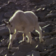 Billy Goat Walking Down a Mountain - VideoHive Item for Sale