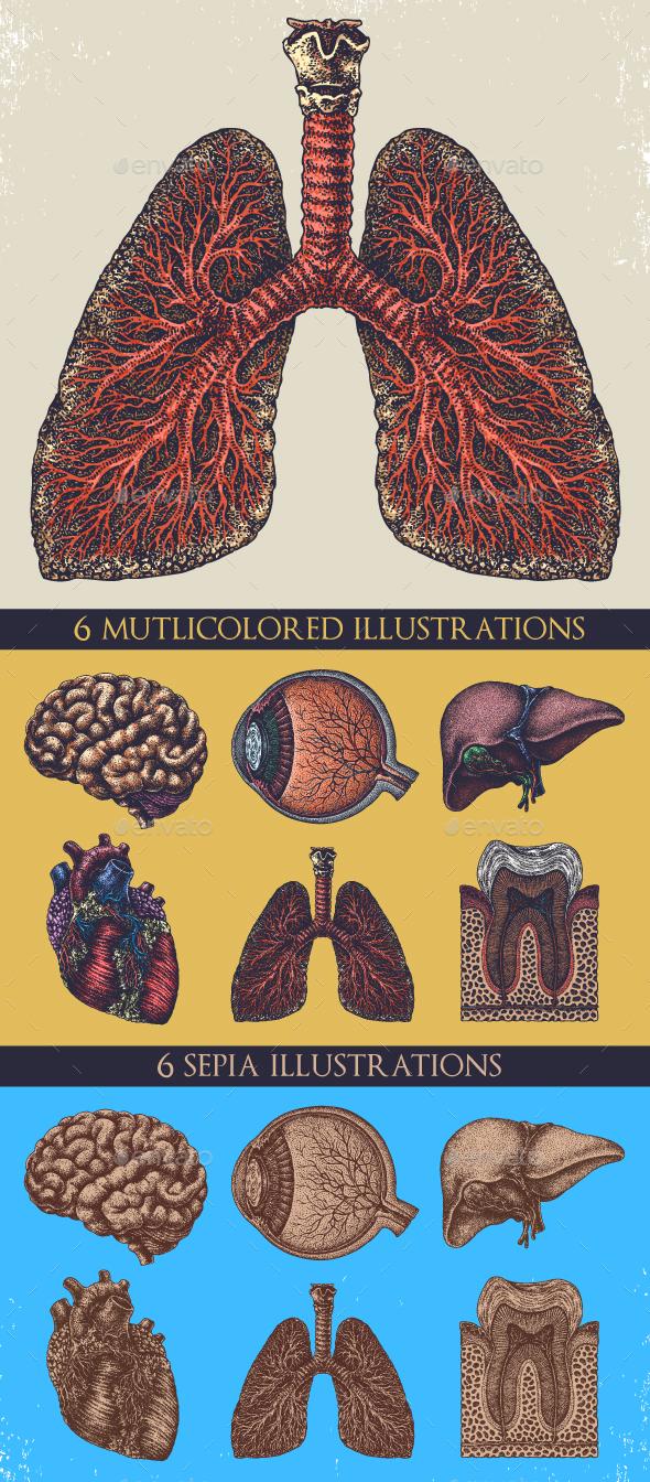Anatomy Drawings - Health/Medicine Conceptual