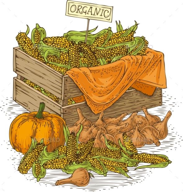 Bulb Onion  Ripe Pumpkins And Wooden Box - Miscellaneous Vectors