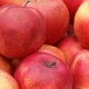 Red Apples - VideoHive Item for Sale