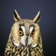 Portrait Of Young Long-Eared Owl  - VideoHive Item for Sale