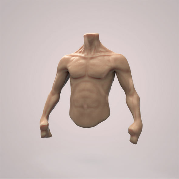 Male Torso - 3DOcean Item for Sale