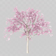 Cherry Tree Blossom - VideoHive Item for Sale