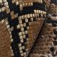 Brown Snake Skin - VideoHive Item for Sale