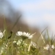 Field Of Daisy Flowers - VideoHive Item for Sale