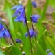 The First Spring Flowers - VideoHive Item for Sale